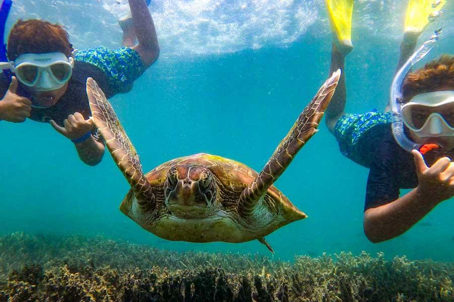 marine life is abundant