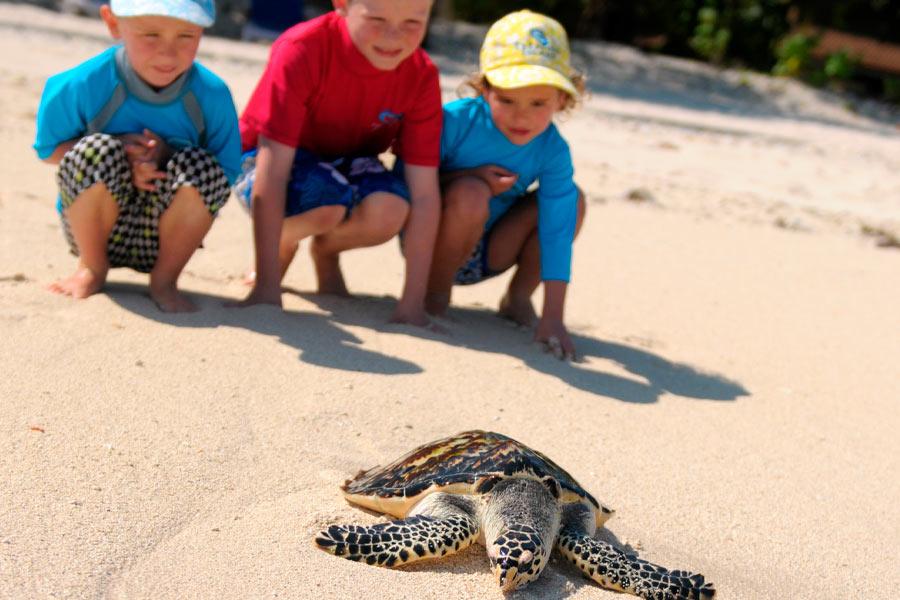 treasure island turtle awareness