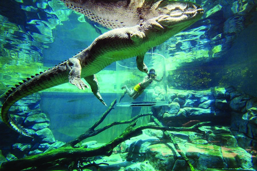 brave the cage of death at crocosaurus cove. image tourism nt shaana mcnaught