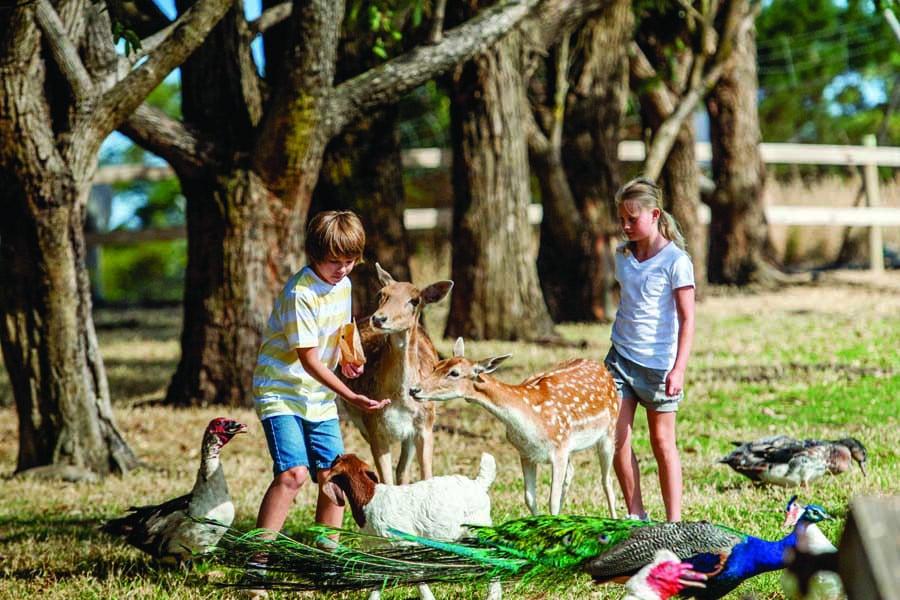 children feeding animals at hahndorf farm barn. image south australian tourism commission adam bruzzone
