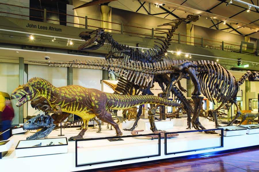 queen victoria museum and art gallery. image tourism tasmania rob burnett