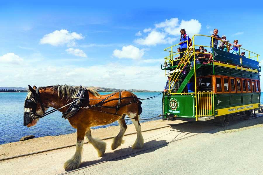 ride a horse drawn tram at victor harbor on the fleurieu peninsula. image ben goode