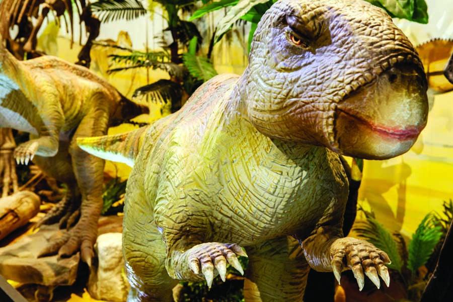 the national dinosaur museum. image visitcanberra