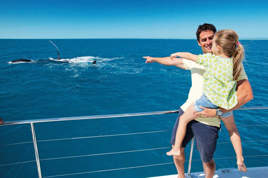 a girl and her dad spot whales on a tour in hervey bay. image tourism and events queensland vince valitutti