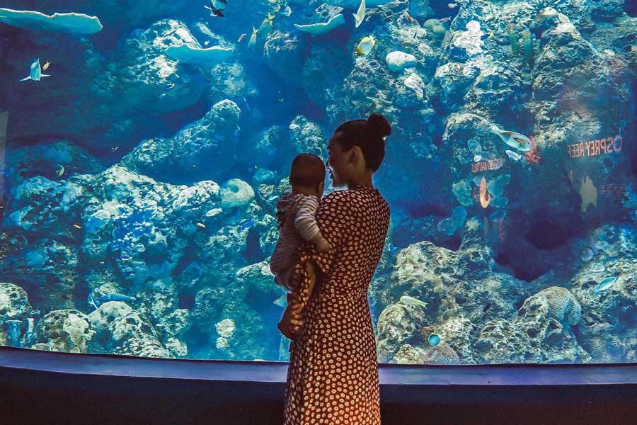 a mum and her baby at cairns aquarium