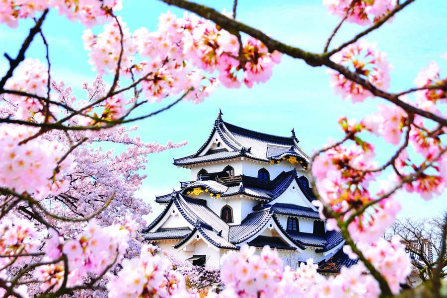 cherry blossoms at hikone castle - best places to visit in Japan with kids