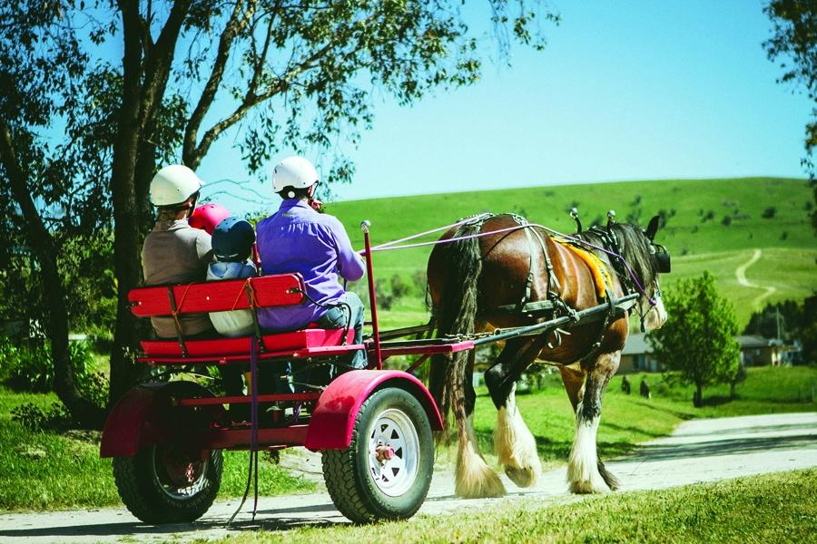 enjoy a horse and buggy ride at barcoos barn