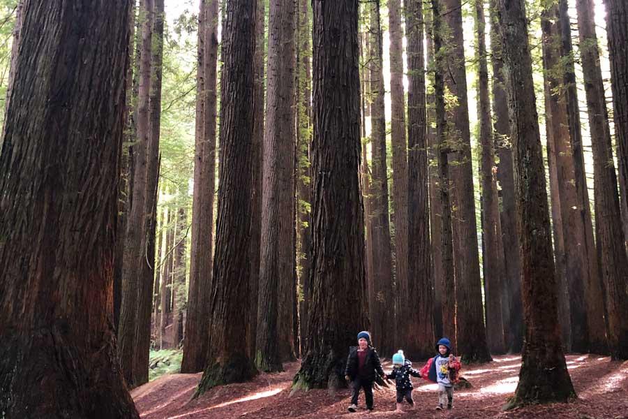 exploring the californian redwoods - Great Ocean Road family trip