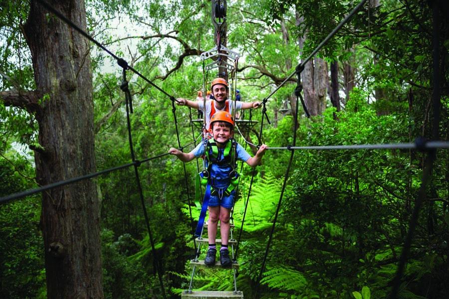 family fun at illawarra fly treetop adventures. image ben holgate