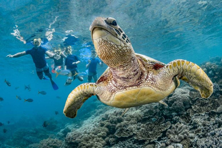 feature a family snorkelling on the great barrier reef