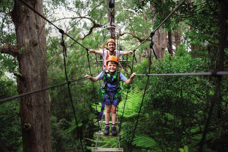 feature family fun at illawarra fly treetop adventures. image ben holgate