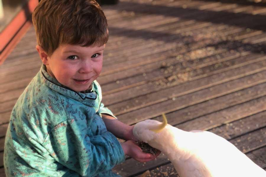 harry feeding our breakfast guest in lorne - Great Ocean Road family trip