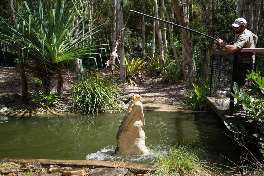 hartleys crocodile adventures. image tourism and events queensland