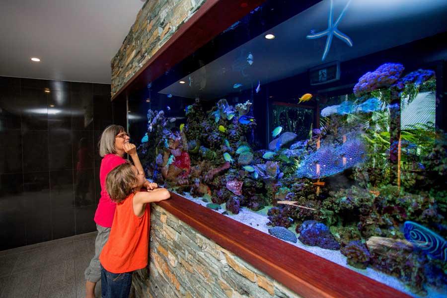 the aquarium at big4 gold coast holiday park