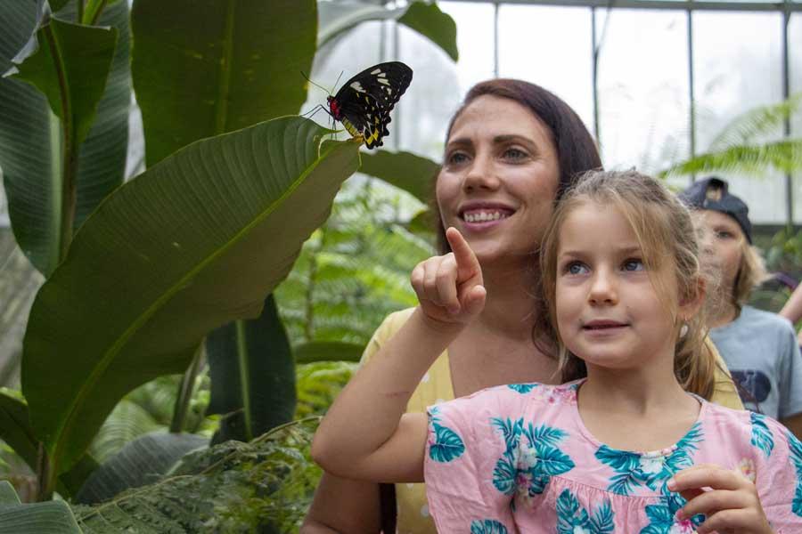 visit the australian butterfly sanctuary