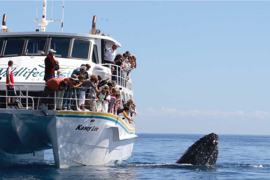 whale watching with wildlife coast cruises off the coast of phillip island