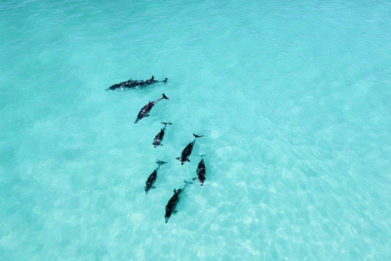 dolphins at pennington bay, Kangaroo Island