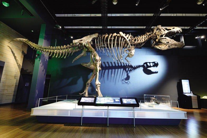 A Tyrannosuarus rex skeleton on exhibit at the Australian Museum in Sydney. Image Destination NSW