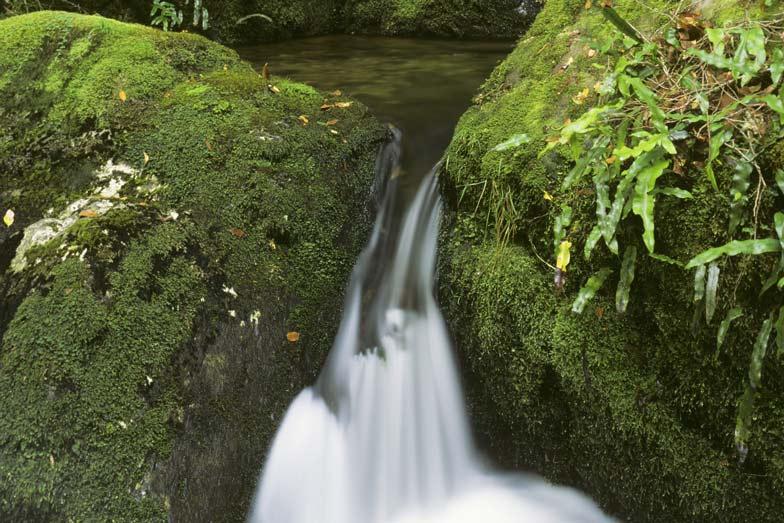 A waterfall in Barrington Tops National Park. Image Jeffrey Drewitz Destination NSW