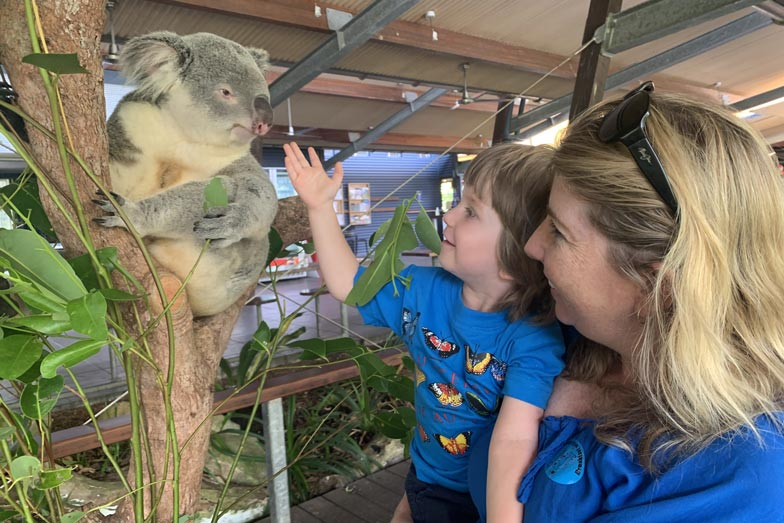 Things to do in Cairns with a toddler - meet a koala at Hartleys Crocodile Adventures.
