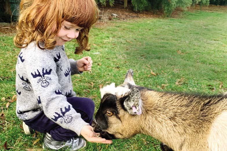 Angus goats Stone Creek Cottage 1