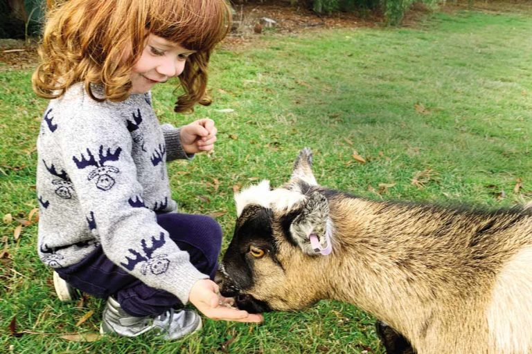 FEATURE Angus goats Stone Creek Cottage