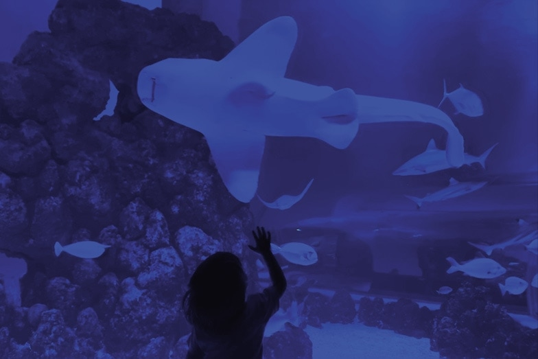 Things to do in Cairns with a toddler - Visit Cairns Aquarium