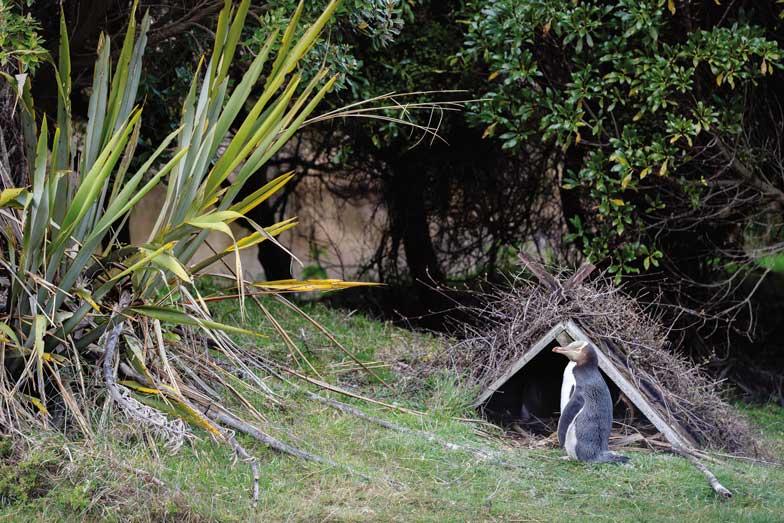 Pengin Place in Dunedin
