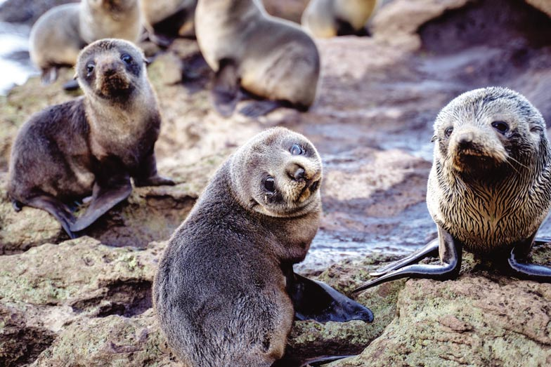 See seal pups on a Natures Wonders Tour.