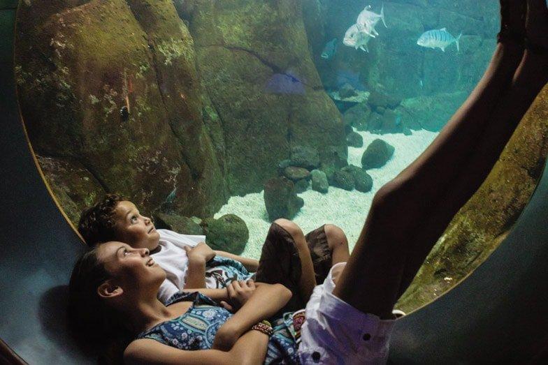 Children watching fish at Waikiki Aquarium. Image Hawaii Tourism Authority Tor Johnson