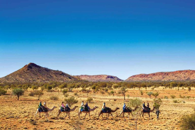 FEATURE Ride through the Outback with Pyndan Camel Tracks at Alice Springs. Image Tourism NT