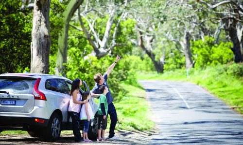 feature a family looking for koalas at cape otway lightstation in victoria during a road